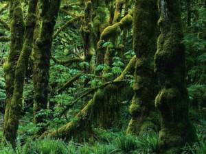 путешествие в волшебном лесу