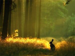 путешествие в лесу